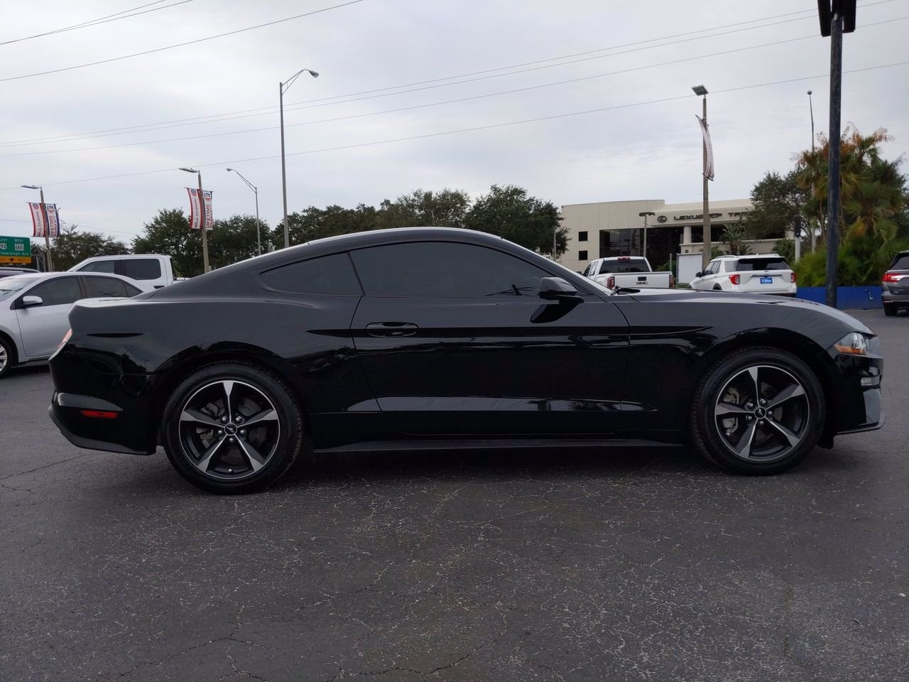 2019 Ford Mustang EcoBoost in Tampa FL Tampa Ford Mustang
